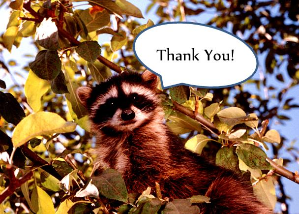 thank you racoon